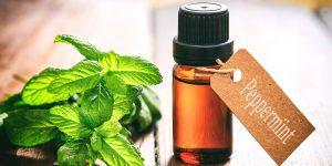 Peppermint Essential Oil   Narayan Wellness Pleasanton, CA